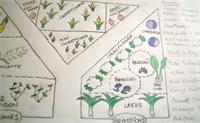 NH Gardening