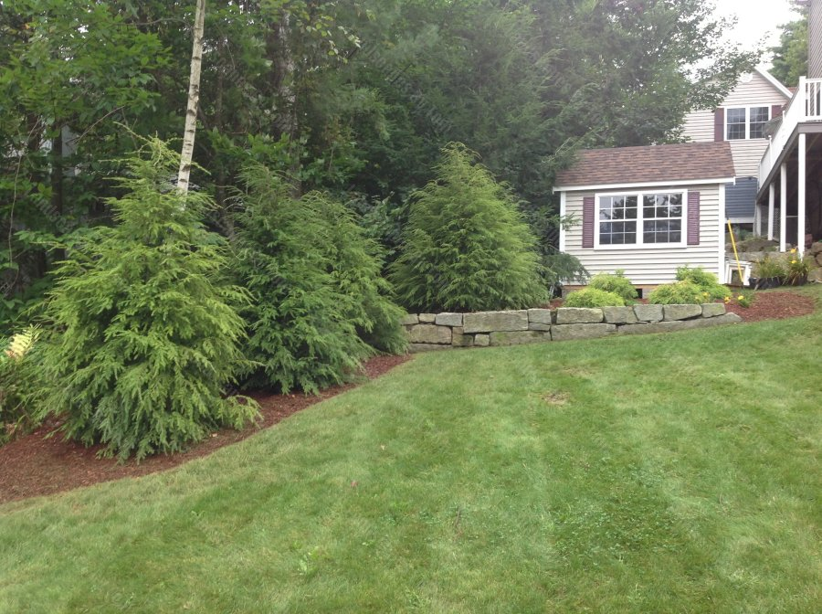 property_line_plantings_for_privacy-min