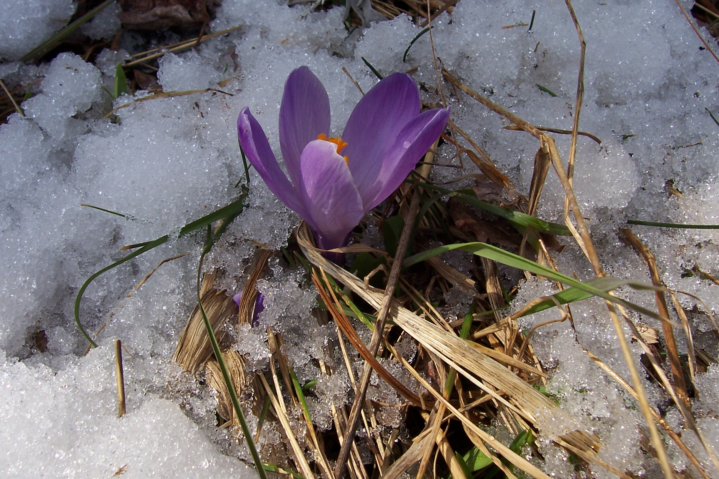 Earliest Spring Blooming Flowers
